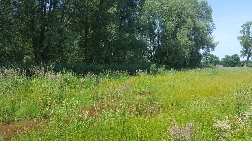 oplevering-natuurproject (22)